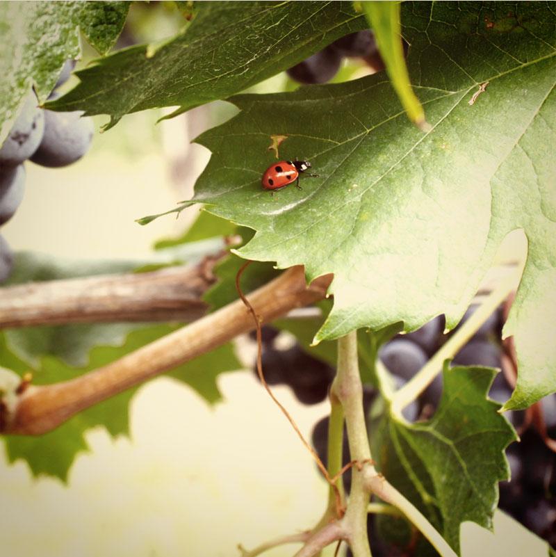 Italian tradition wine